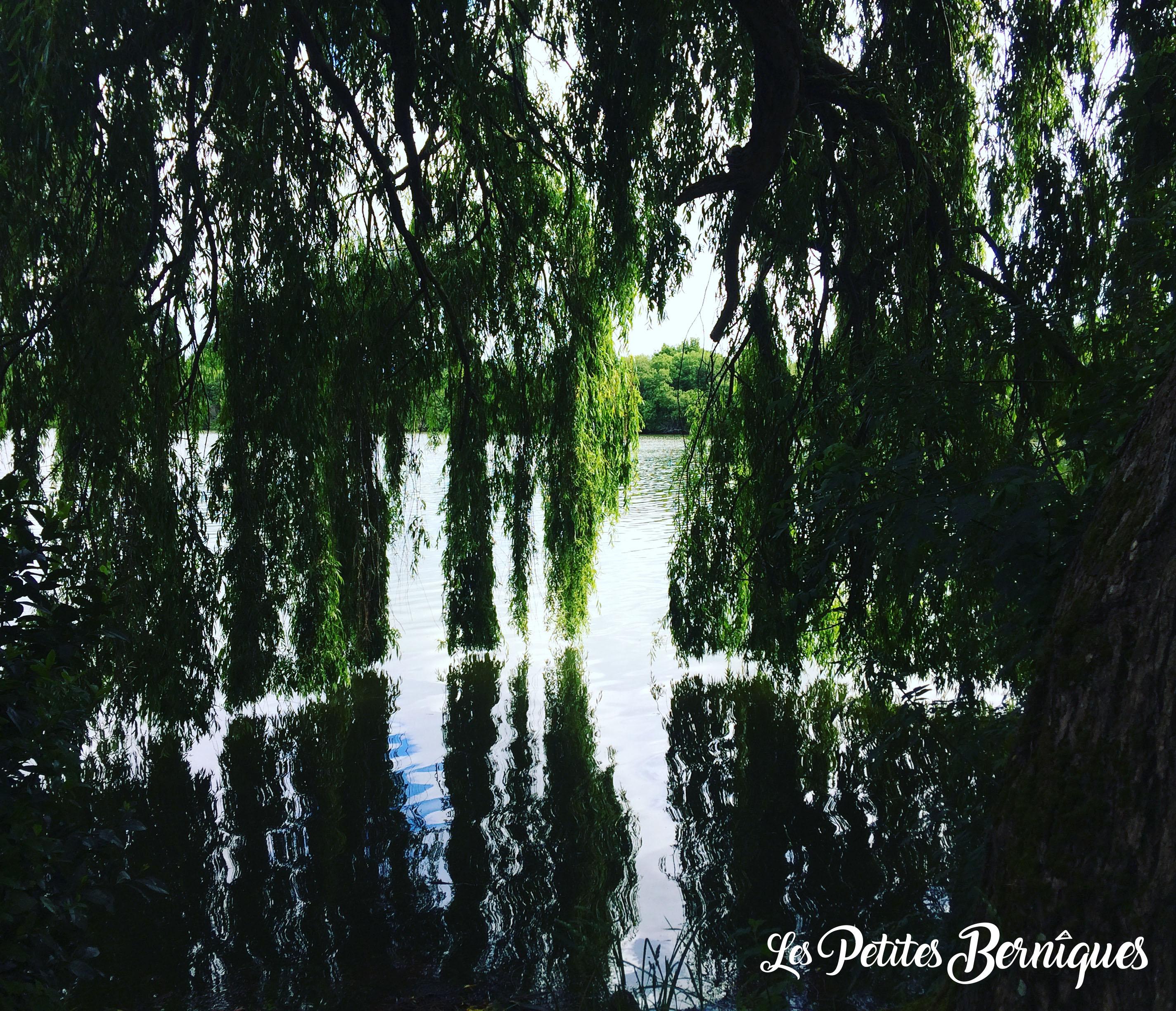 Le Bois Joalland-Le saule pleureur géant