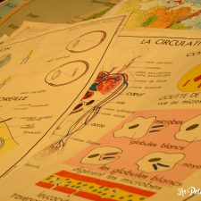 anciennes cartes corps humain aulnette