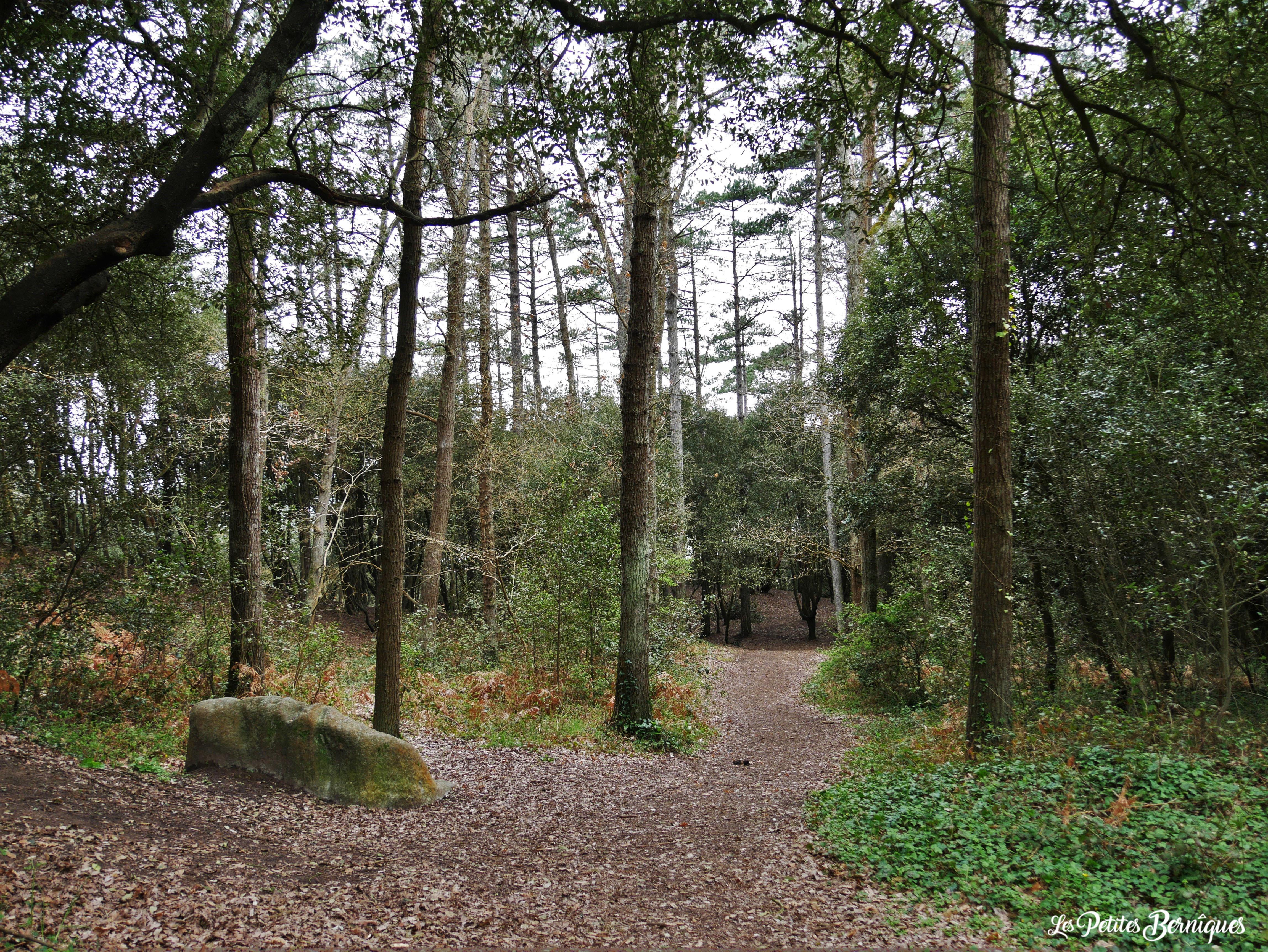 Forêt de la Pierre Attelée - Saint-Brévin