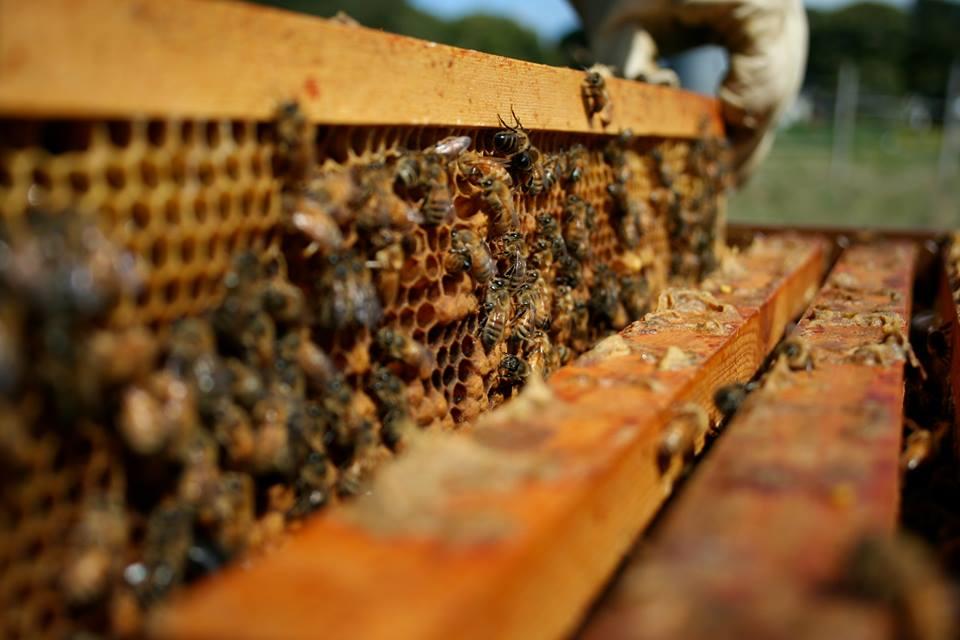 abeilles saint-nazaire