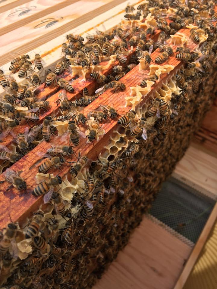 cadre abeilles