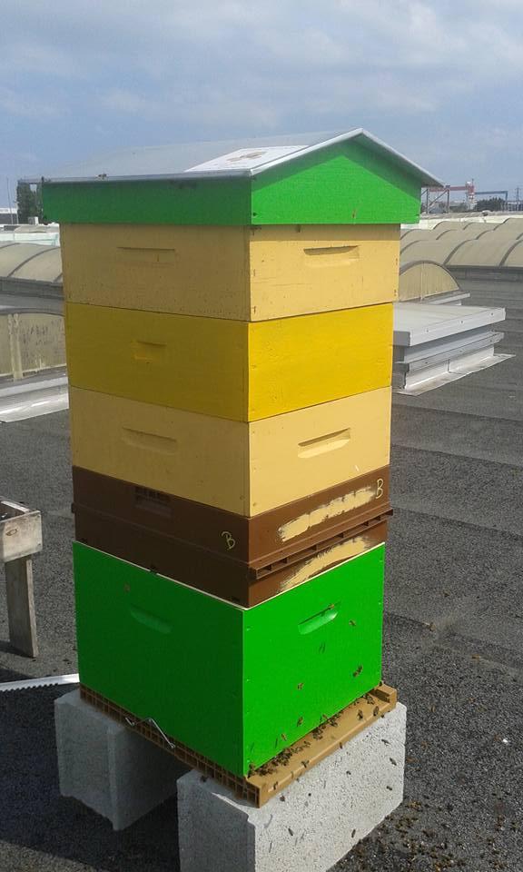 ruche en entreprise apisouest