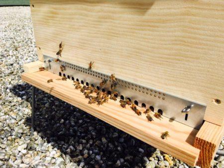ruches abeilles apisouest