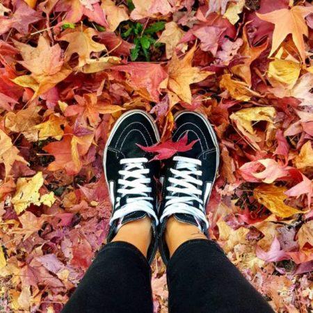 Dans les feuilles