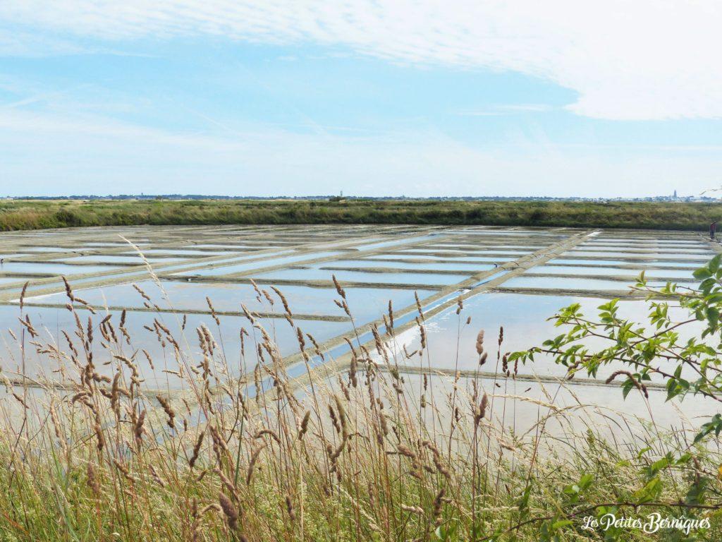 Marais salants, sel de Guerande